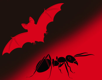 ¿Gastos vampiro vs gastos hormiga?
